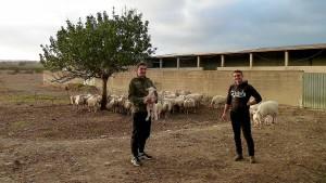Hirten in Turnschuhen