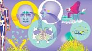Ein vielschichtiges und komplexes System. Forscher haben mehrere Hypothesen, warum wir in der Nase acht Hohlräume haben.