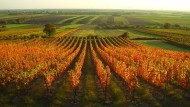 Ideale Bedingungen: Schon die Römer wussten das milde Klima am südlichen Ufer der Donau zu schätzen. Zu den besten Weinlagen in Carnuntum zählt der Spitzberg.