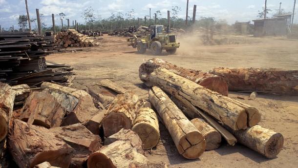 Brasilien holzt den Regenwald massiv ab