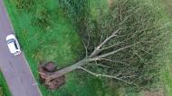 Das ist ja noch mal gut gegangen, denn der Baum liegt nicht auf der Fahrbahn. Viele andere Wetterschäden sind gefährlicher und teurer.