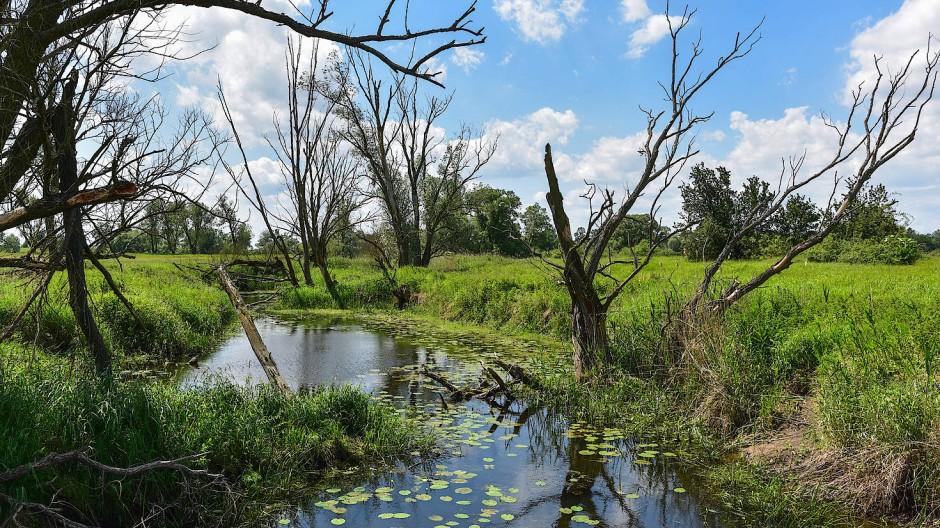 Der Klimawandel betrifft auch die weniger prominenten Teile des Erdsystems. So beispielsweise die europäischen Süßwasservorkommen wie hier im Odervorland.