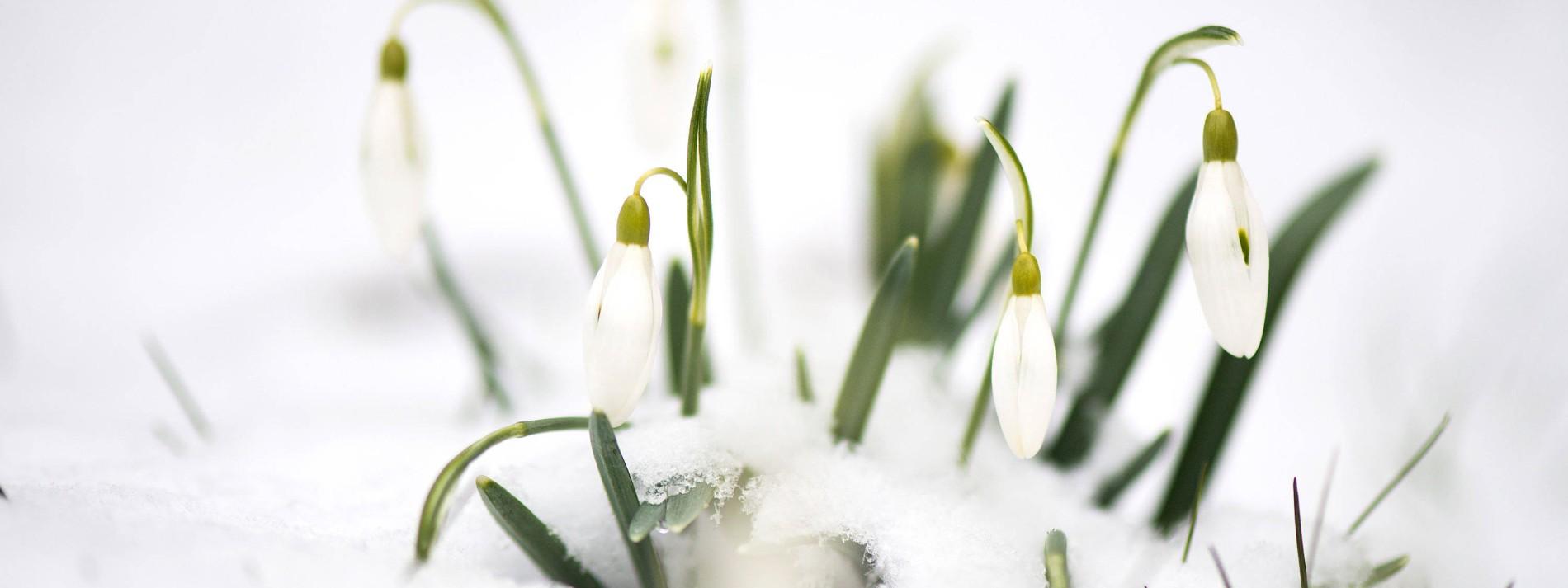 Der Frühling lässt auf sich warten