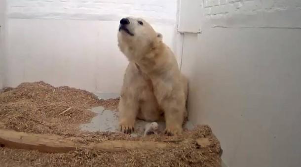 Da war alles noch gut: Eisbärin Tonja mit ihrem Anfang Dezember geborenen Eisbär-Baby.