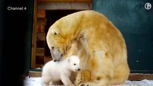 Erstmals seit 25 Jahren Eisbär geboren