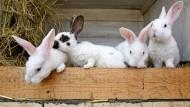 Scheiden tut weh: Wie man das mit dem Kaninchenverzehr richtig angeht, steht in diesem Buch.
