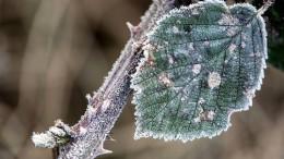 Frost bis zu minus 20 Grad am Wochenende