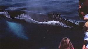 Zum Stelldichein der Meeressäuger