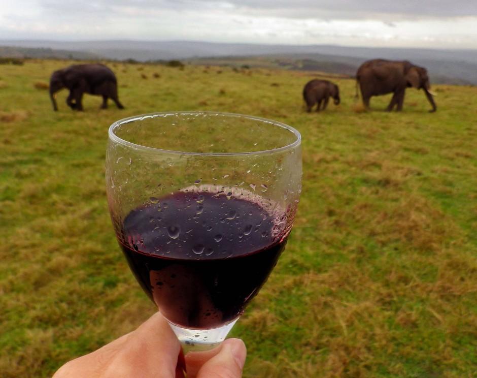 Weintrinken bis man Elefanten sieht  - grau und rosa.