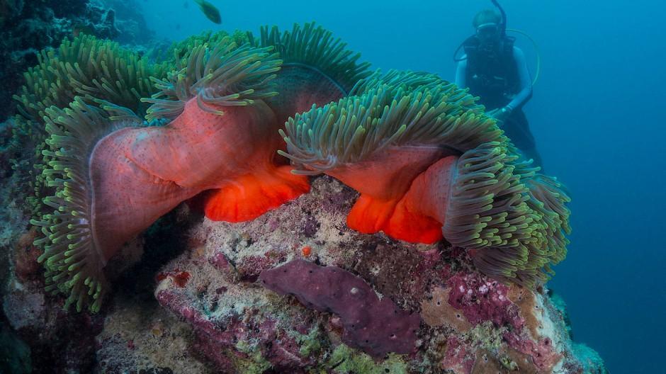 Tauchgang zum Hausriff: Das Resort verfügt über eine eigene Meeresbiologin, sie kümmert sich liebevoll um die Korallen.