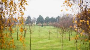 Letzte Ruhestätte Friedhofsgarten