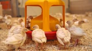 Sämtliche Antibiotika sollen auf den Prüfstand