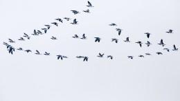 Kälte lässt Zugvögel mitten in Deutschland stranden