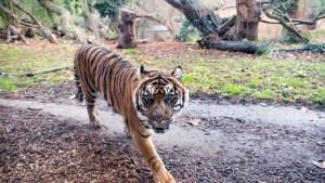 Partnerbörse für Tiger und Tauben