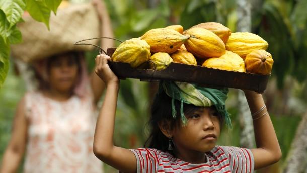 Schokoladenhersteller kämpfen gegen Kinderarbeit