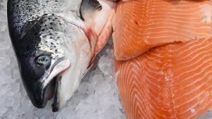 Amerika genehmigt gentechnisch veränderten Lachs