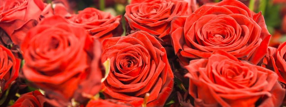 Günstiger Als In Baden Baden, Essen Und Heidelberg Bekommt Man Rote Rosen  Auch Nicht